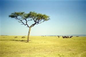 treeplain