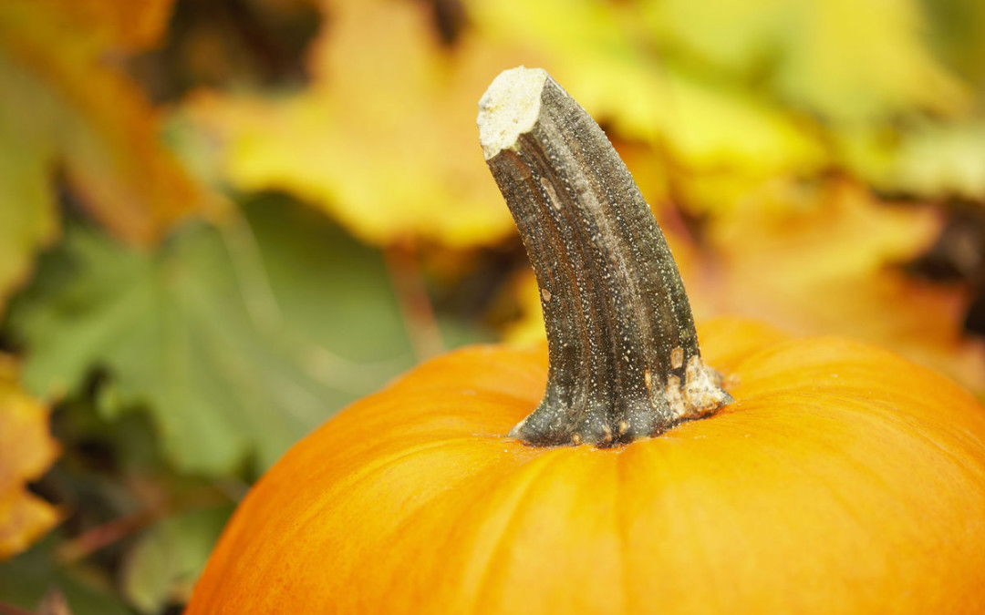 The Great Pumpkin Patch is coming back to UBC!